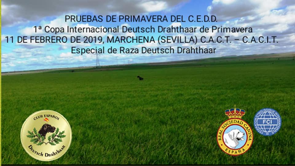 Primavera 2019 Cedd. 30 y 31 de Enero. Espacial Deutsch Drahthaar 11 Febrero.