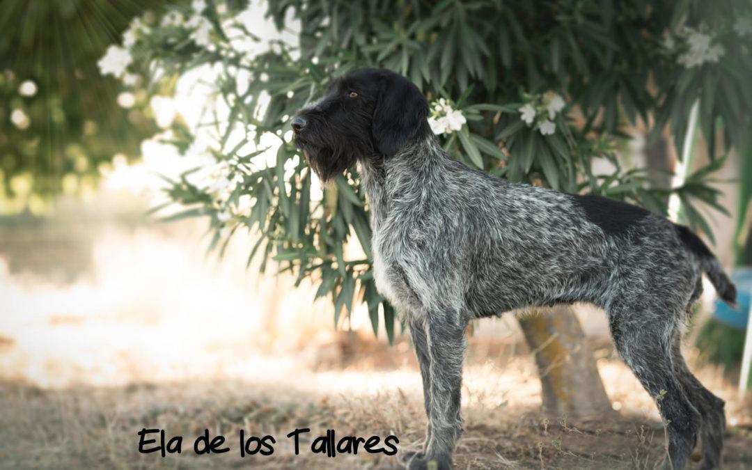 Ela de Los Tallares x Darko de Los Tallares