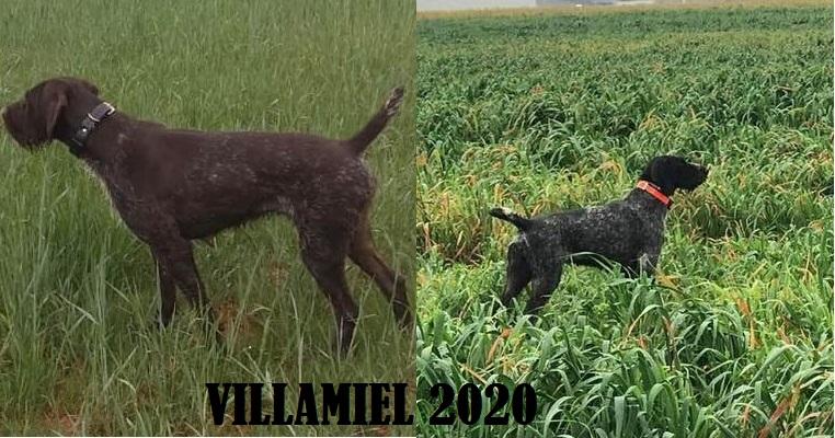 VILLAMIEL(Toledo) 2020, VIDEO ANDALUCÍA 2020 y resultados Villamiel